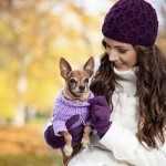 Best tips for dressing your pet