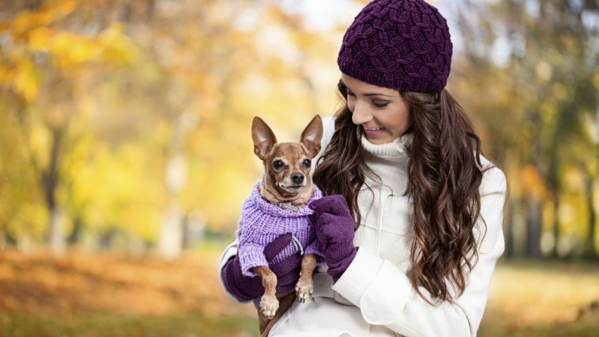 dressing your pet https://www.searchub.com/blog/best-tips-for-dressing-your-pet/