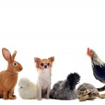 Everything you need to know when buying pet supplies