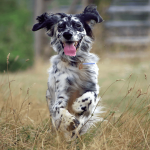6 highly recommended advices to make your dog healthier