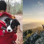 Guide for Traveling with your Dog
