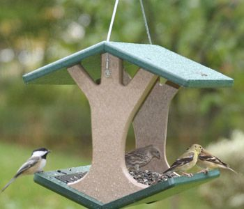 Feeders & Water Bottles